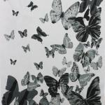 Butterfly Print Design Scarves FZS103